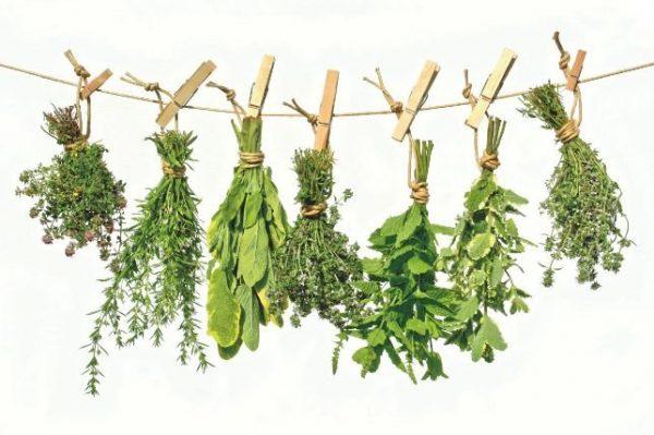 Le piante depurative: un aiuto dalla natura